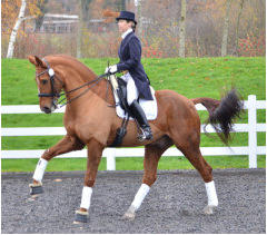 Karen riding Mister Mole in the Sam Jamieson Deluxe Chiron Dressage Saddle